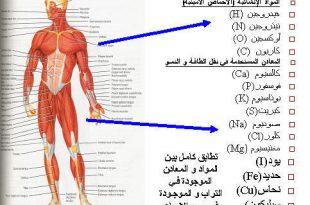 صوره كم عدد عضلات جسم النسان