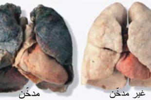 صور سباب التدخين