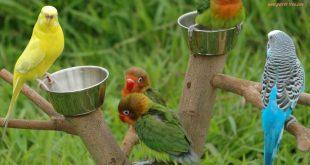 صوره صور طيور متحركة تجنن