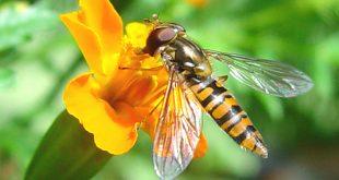 موضوع رائع عن النحل