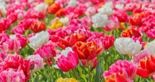 زهور جميله ملونه بالطبيعه