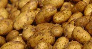 صورة كيف تتخلصي من اضرار البطاطس المقلية
