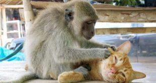 صور مضحكة جدا عن الحيوانات