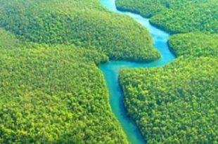 بالصور ماهو اكبر نهر في العالم أين يقع نهر الأمازون 310x205