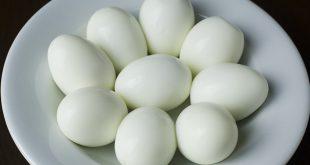 فوائد بيض الحمام