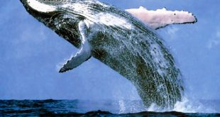 ضخم مخلوق في العالم