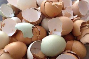 صور قشر البيض للبشرة