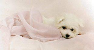 صور صور كلاب جميلة
