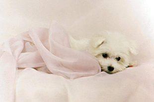 صوره صور كلاب جميلة