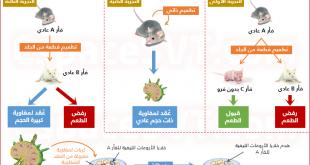 صور الفرق بين الاستجابة المناعية الخلطية و الخلوية