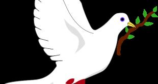صورة المولفات التي تناولت قضية السلام والحرب