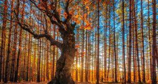 منظر فصل الخريف