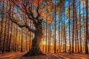 صور منظر فصل الخريف