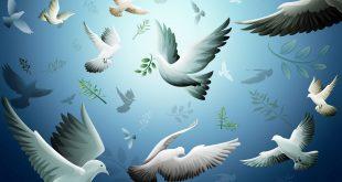 السلم و السلام