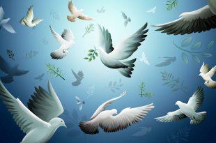 صور السلم و السلام