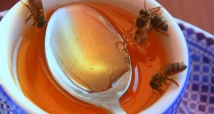 صورة فوائد العسل الابيض على الريق