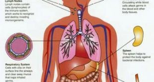 صورة تركيب جسم الانسان