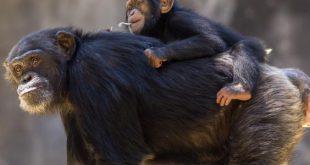 صور اذكى حيوان بعد الانسان