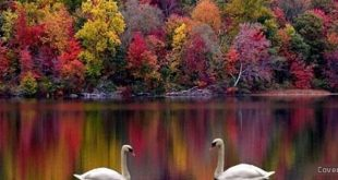 صورة خلفيات طبيعية للفيس بوك