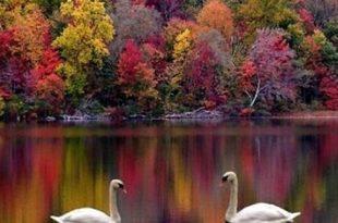 صوره خلفيات طبيعية للفيس بوك