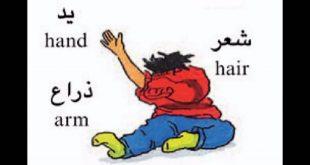صورة تعليم الاطفال اعضاء الجسم بالانجليزي
