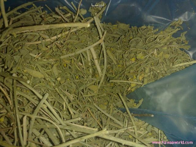 صورة عشبة زازية للانجاب