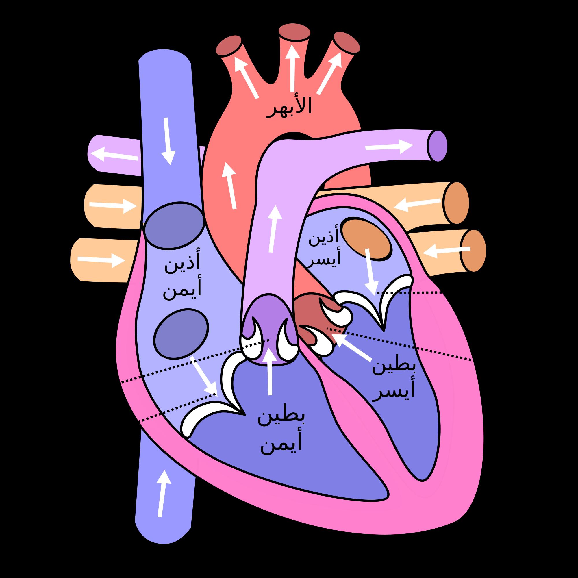 صوره امراض القلب واعراضها