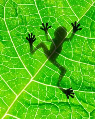 صور ما هو مفهوم علم البيئة