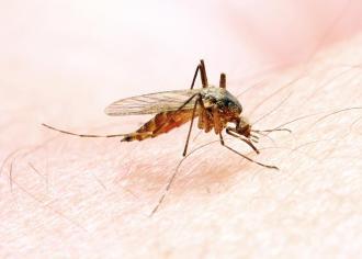 صوره طرق انتقال الملاريا