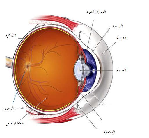 اجزاء العين - العالم اجمل