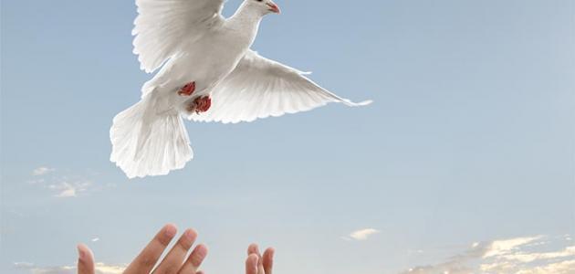 صورة مفهوم السلم والسلام , يااااااه بجد معني السلام رائع ومريح
