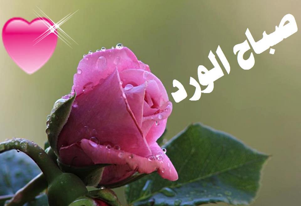 صورة صور صباح الخير roses , احدث صور صباح الخير