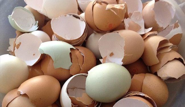 صورة قشر البيض للبشرة