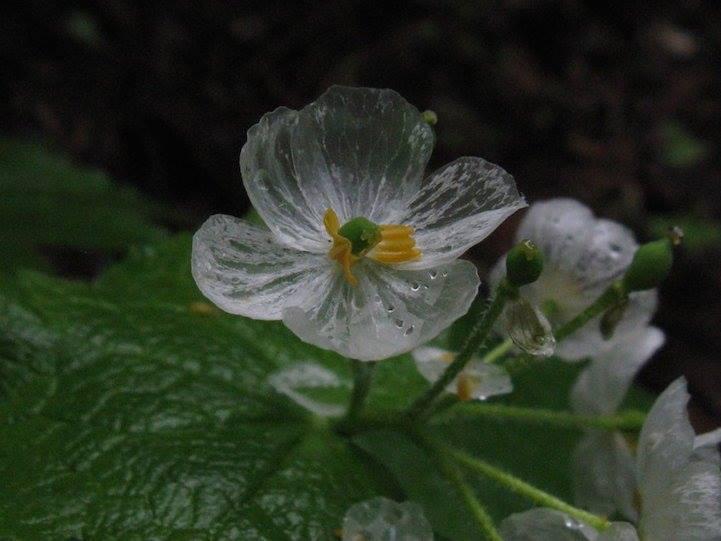 صورة بالصور لقطات رائعة ازهار شفافة