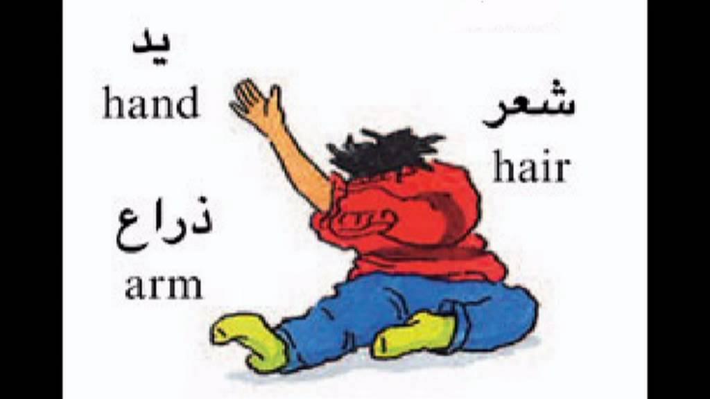 صور تعليم الاطفال اعضاء الجسم بالانجليزي