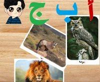 صور حيوان من 4 حروف ماهو
