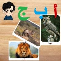 صورة حيوان من 4 حروف ماهو