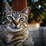 قمة الابداع صور قطط , احلي صور نونو بساس صغار وكبار