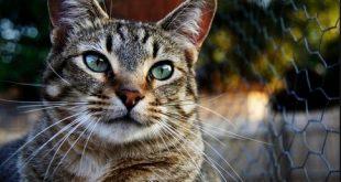 بالصور قمة الابداع صور قطط , احلي صور نونو بساس صغار وكبار 20160822 235 1 310x165