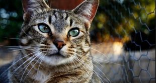 صورة قمة الابداع صور قطط , احلي صور نونو بساس صغار وكبار