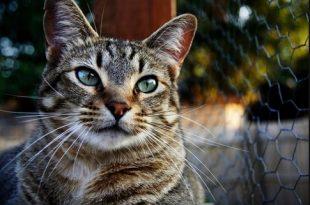 بالصور قمة الابداع صور قطط , احلي صور نونو بساس صغار وكبار 20160822 235 1 310x205