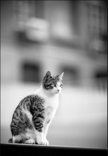 صور قمة الابداع صور قطط , احلي صور نونو بساس صغار وكبار