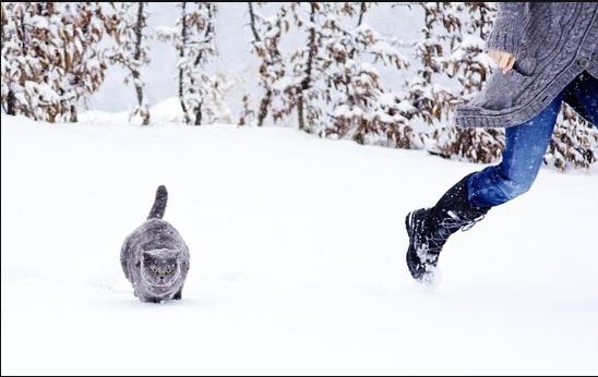 بالصور قمة الابداع صور قطط , احلي صور نونو بساس صغار وكبار 20160822 237
