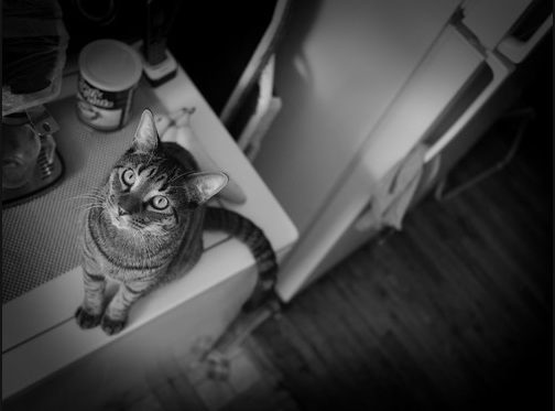 بالصور قمة الابداع صور قطط , احلي صور نونو بساس صغار وكبار 20160822 238