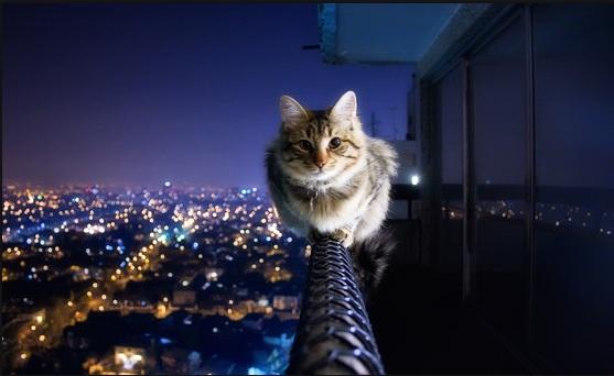 بالصور قمة الابداع صور قطط , احلي صور نونو بساس صغار وكبار 20160822 239
