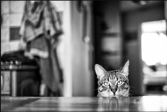 بالصور قمة الابداع صور قطط , احلي صور نونو بساس صغار وكبار 20160822 240
