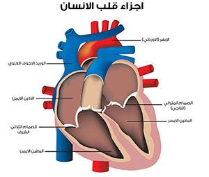ما هي اعراض الاصابة بمرض هبوط القلب