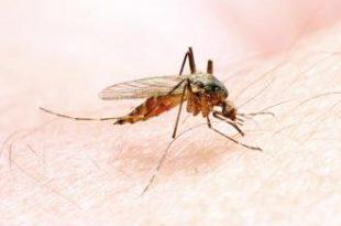 صور طرق انتقال الملاريا
