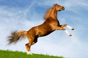 صور صفات الحصان