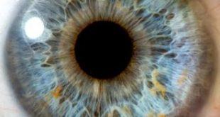 صورة مكونات العين 396f5e4c4857a87129b718c5bf111159 310x165